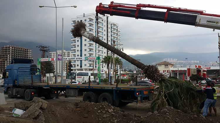palmiye 2