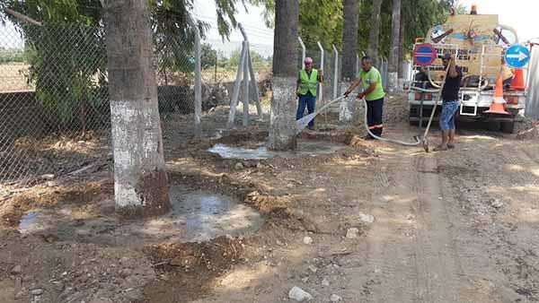 Pac Meydanı'ndaki Palmiyeler Yeni Yerlerine Taşınıyor