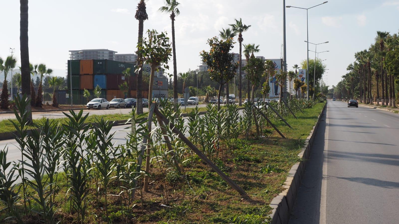 İskenderun'da Orta Refüj Ve Kavşaklarda Bitkilendirme Çalışmaları