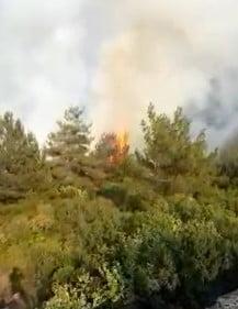 Soğukolukta Orman Yangını Çıktı